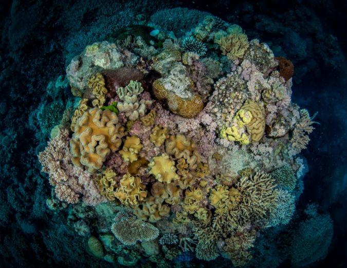 Destinazione: Grande Barriera Corallina